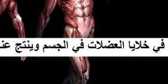 تحدث عملية التخمر في خلايا العضلات في الجسم وينتج عنها حمض اللاكتيك